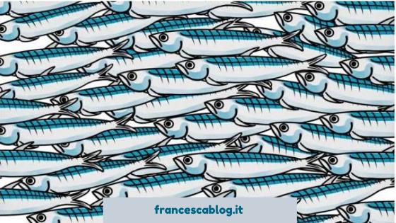 Branco di sardine disegnato